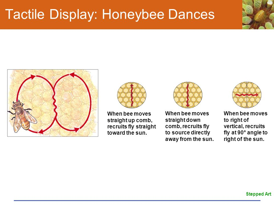 Tactile Display: Honeybee Dances