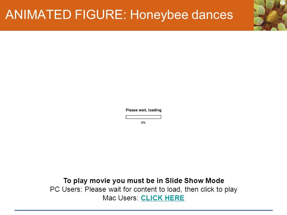 ANIMATED FIGURE: Honeybee dances