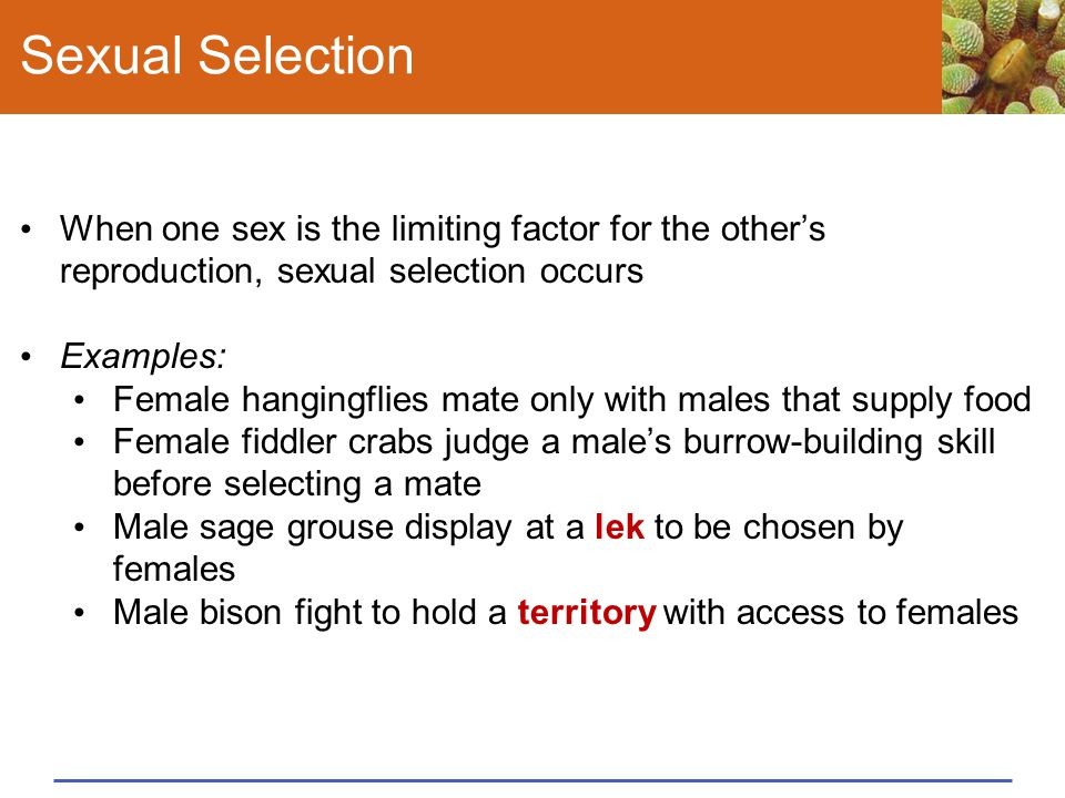 Sexual Selection When one sex is the limiting factor for the other's reproduction, sexual selection occurs.
