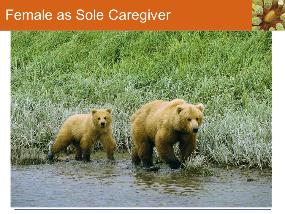 Female as Sole Caregiver