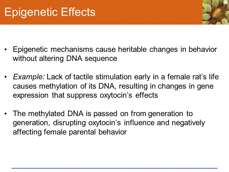 Epigenetic Effects Epigenetic mechanisms cause heritable changes in behavior without altering DNA sequence.