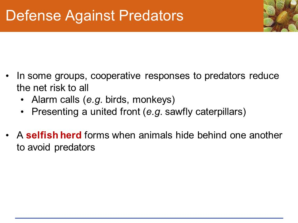 Defense Against Predators