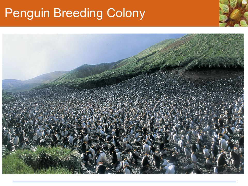 Penguin Breeding Colony