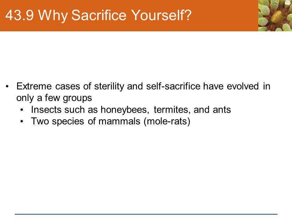 43.9 Why Sacrifice Yourself