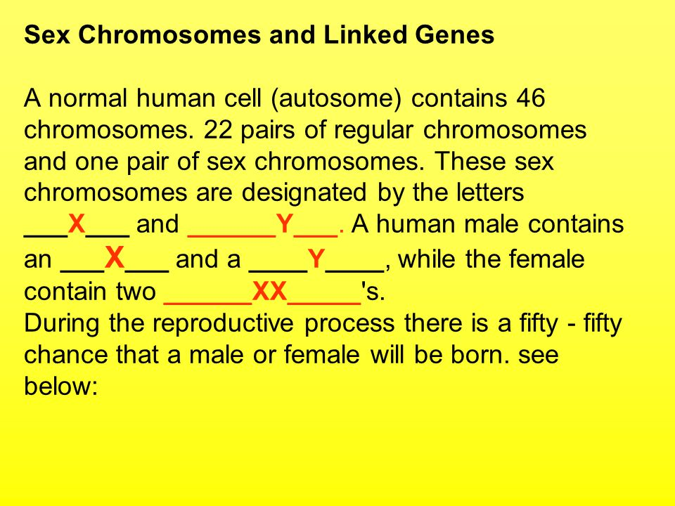 Sex Chromosomes and Linked Genes A normal human cell (autosome) contains 46 chromosomes.