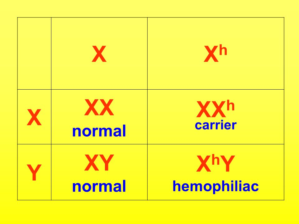 X Xh XX normal XXh carrier Y XY XhY hemophiliac