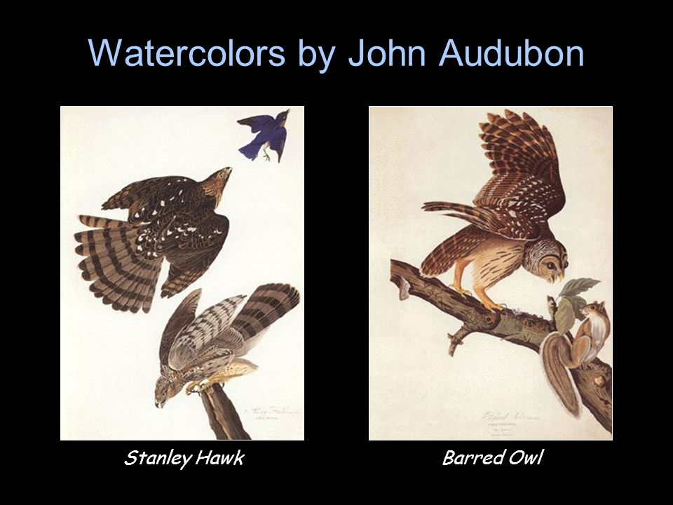 Watercolors by John Audubon
