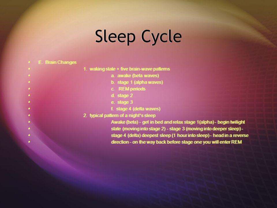 Sleep Cycle E. Brain Changes