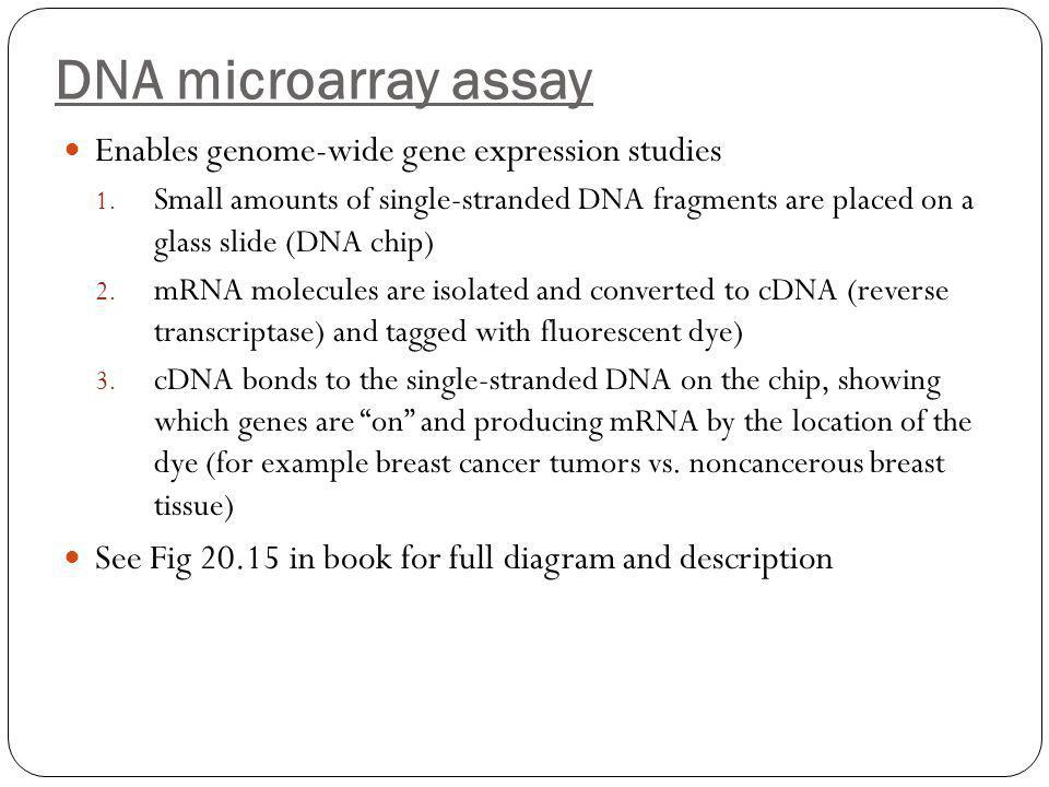 DNA microarray assay Enables genome-wide gene expression studies