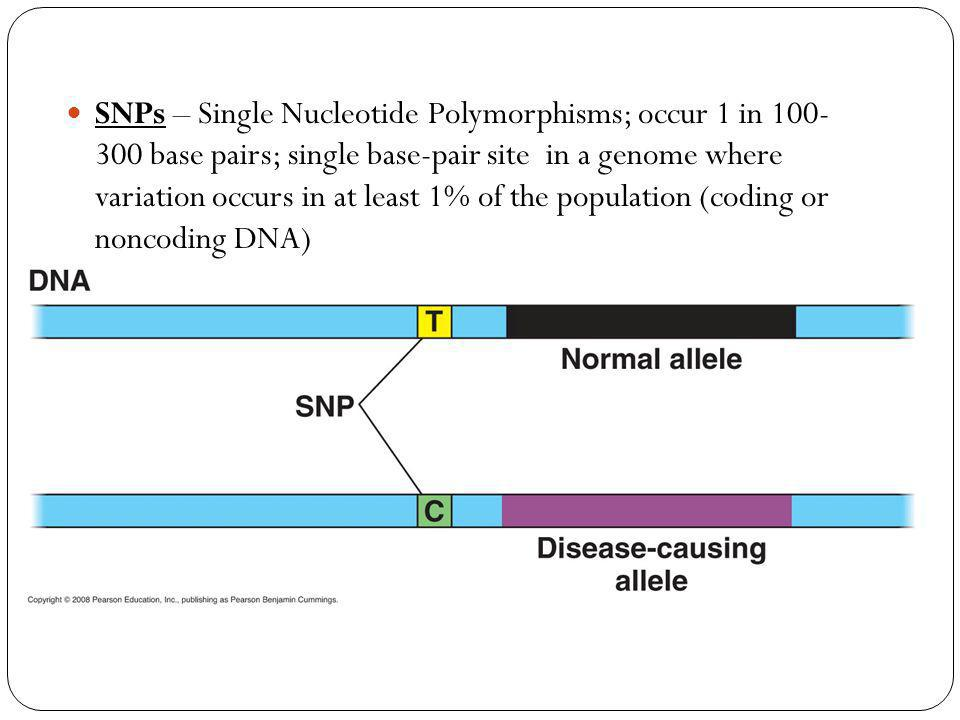 SNPs – Single Nucleotide Polymorphisms; occur 1 in 100- 300 base pairs; single base-pair site in a genome where variation occurs in at least 1% of the population (coding or noncoding DNA)
