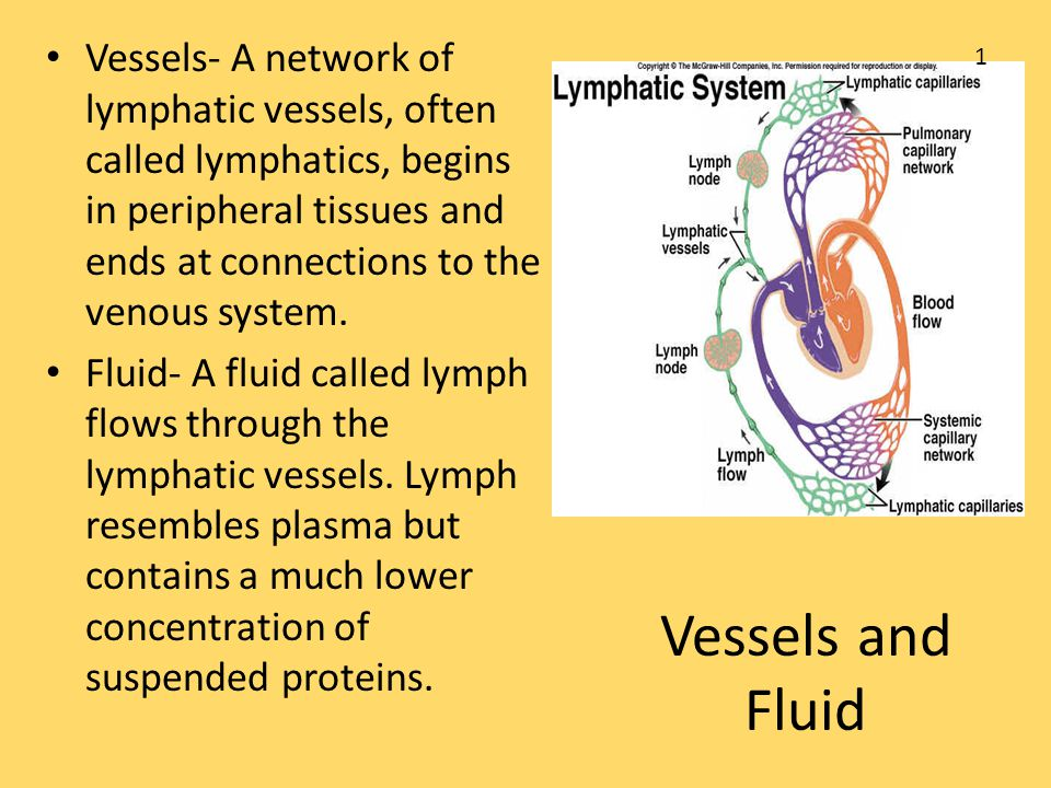 Vessels- A network of lymphatic vessels, often called lymphatics, begins in peripheral tissues and ends at connections to the venous system.