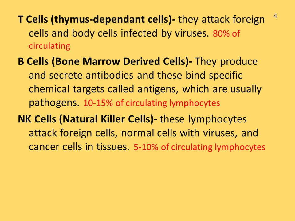 T Cells (thymus-dependant cells)- they attack foreign cells and body cells infected by viruses. 80% of circulating
