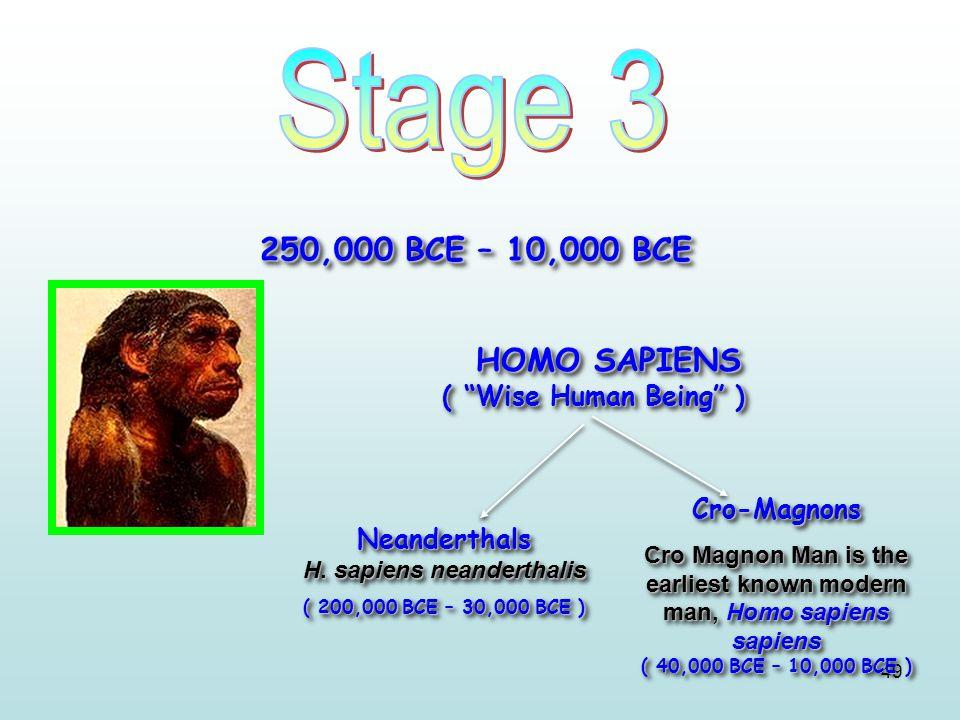 HOMO SAPIENS ( Wise Human Being )
