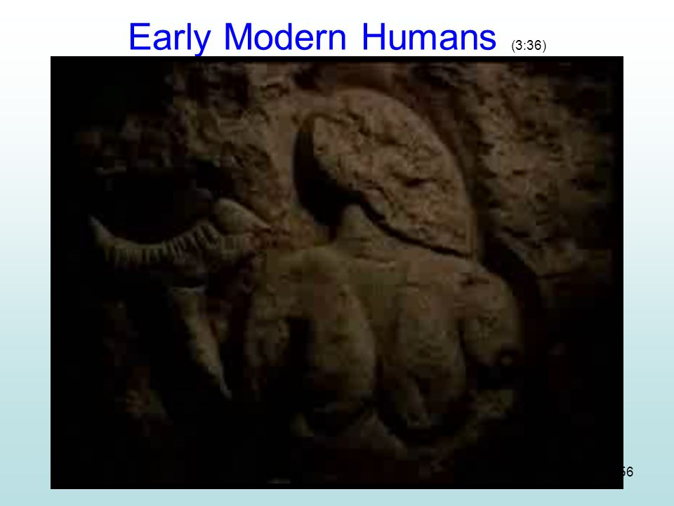 Early Modern Humans (3:36)