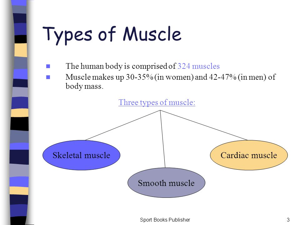 Types of Muscle Skeletal muscle Smooth muscle Cardiac muscle