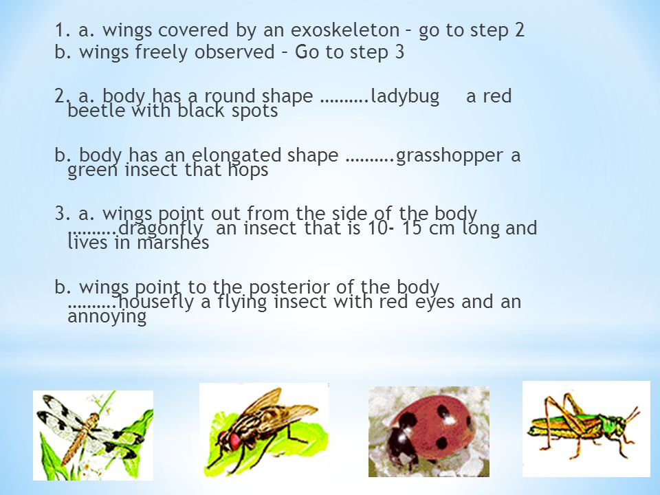 1. a. wings covered by an exoskeleton – go to step 2