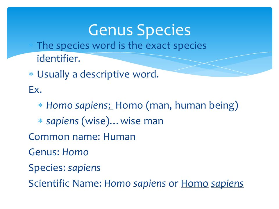 Genus Species The species word is the exact species identifier.