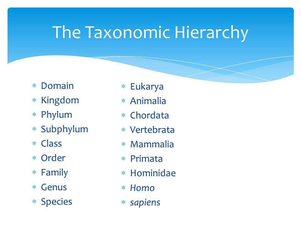The Taxonomic Hierarchy