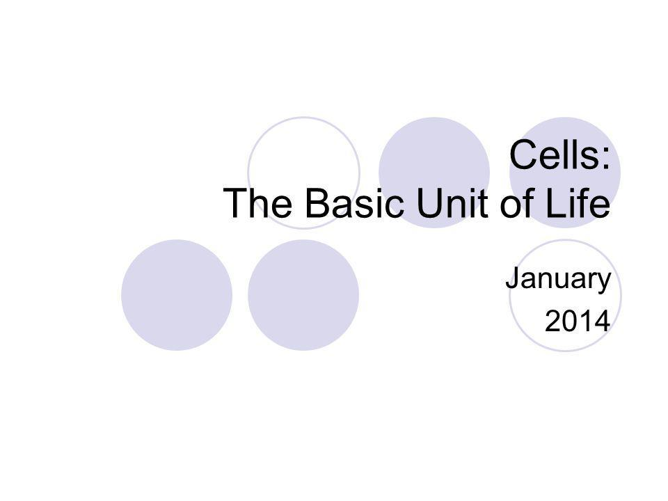 Cells: The Basic Unit of Life