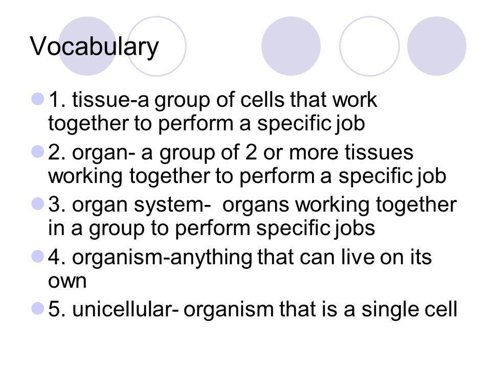 Vocabulary 1. tissue-a group of cells that work together to perform a specific job.