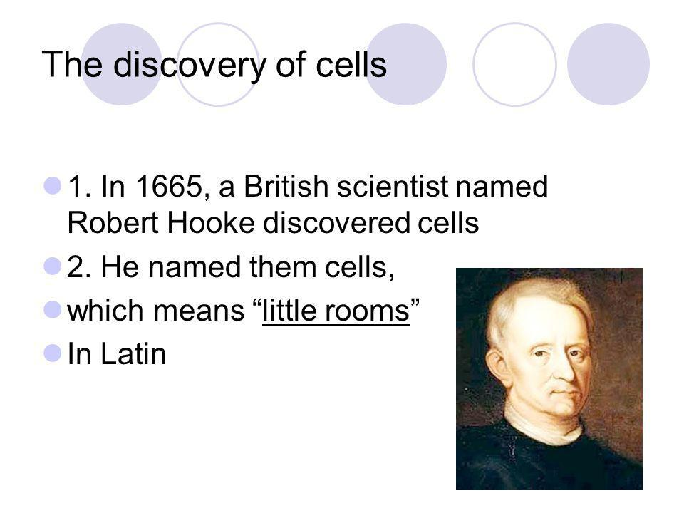 The discovery of cells 1. In 1665, a British scientist named Robert Hooke discovered cells. 2. He named them cells,