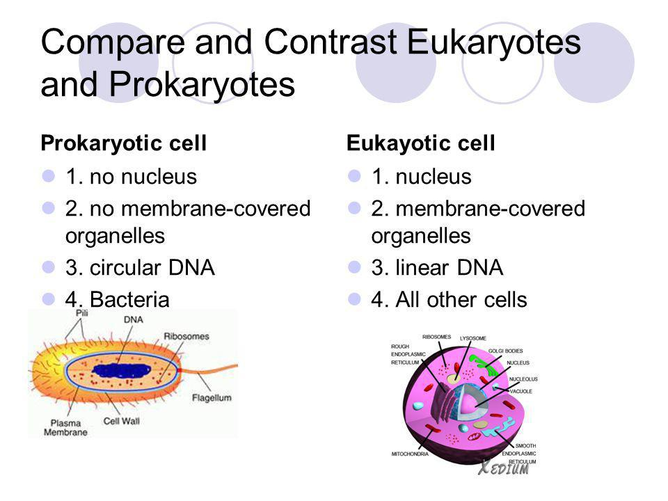 Compare and Contrast Eukaryotes and Prokaryotes