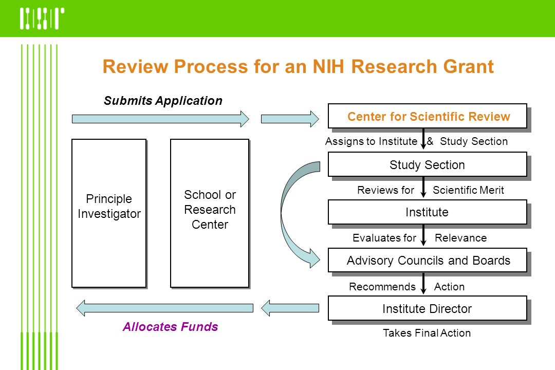 Review Process for an NIH Research Grant
