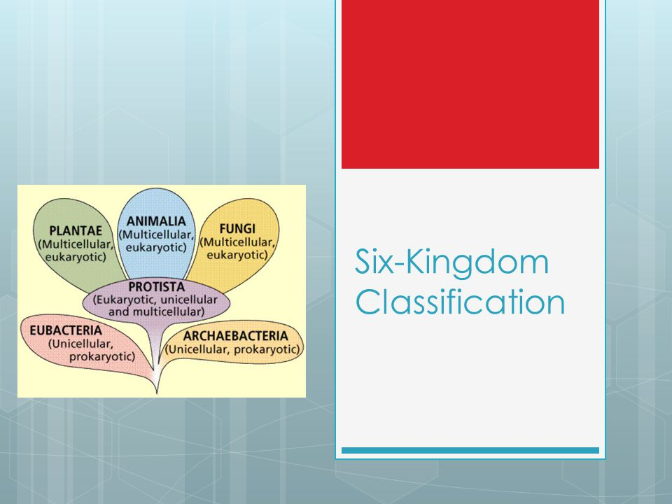 Six-Kingdom Classification