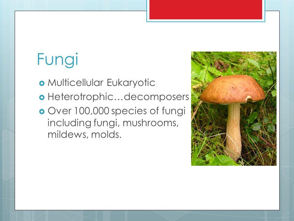 Fungi Multicellular Eukaryotic Heterotrophic…decomposers