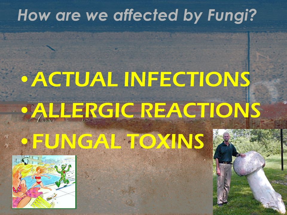 How are we affected by Fungi