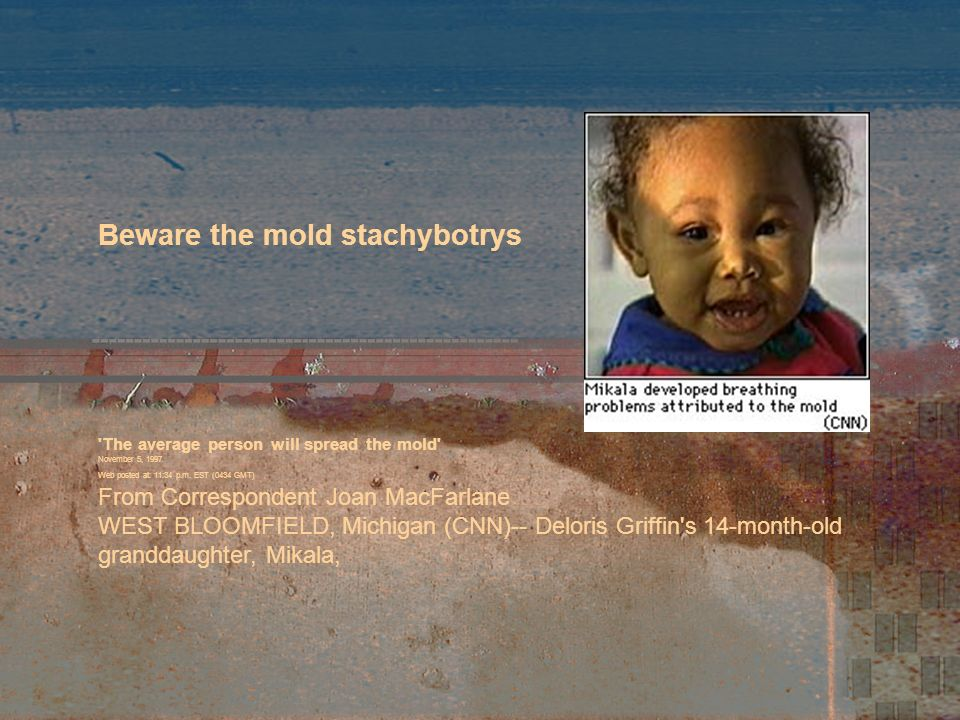 Beware the mold stachybotrys