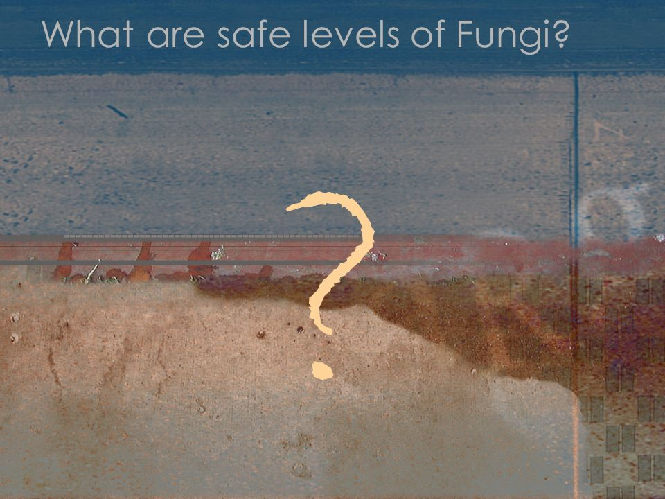 What are safe levels of Fungi