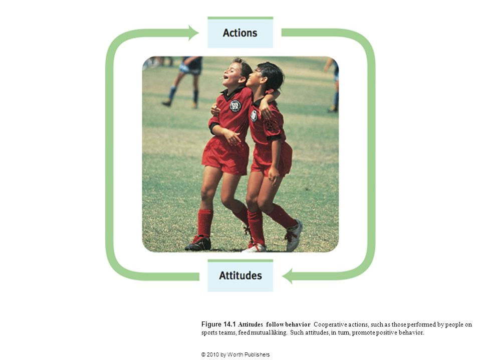 Figure 14.1 Attitudes follow behavior Cooperative actions, such as those performed by people on sports teams, feed mutual liking. Such attitudes, in turn, promote positive behavior.