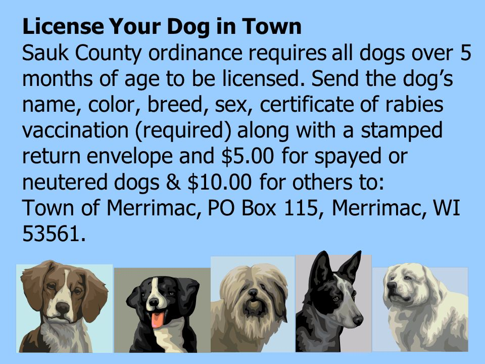 License Your Dog in Town Sauk County ordinance requires all dogs over 5 months of age to be licensed.