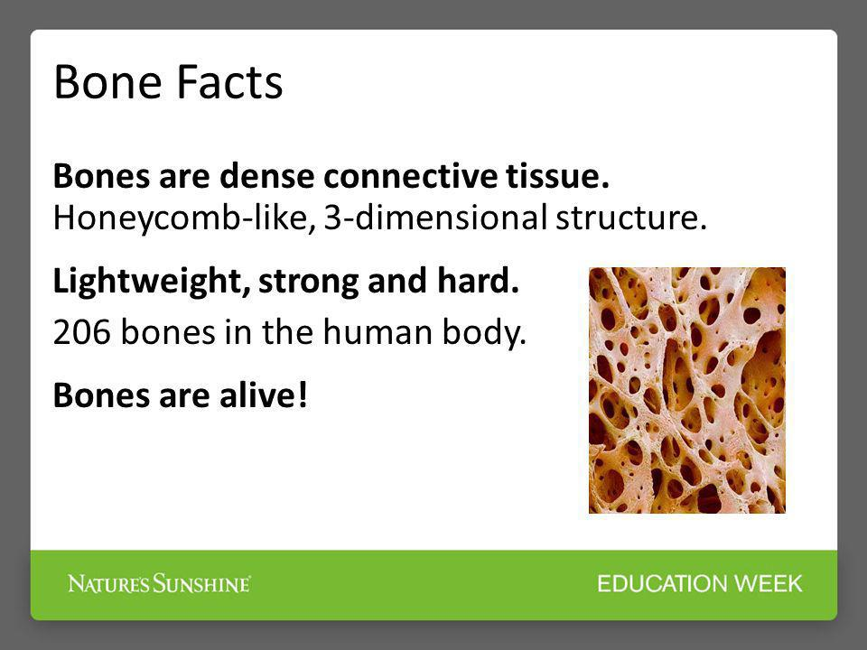 Bone Facts Bones are dense connective tissue. Honeycomb-like, 3-dimensional structure. Lightweight, strong and hard.