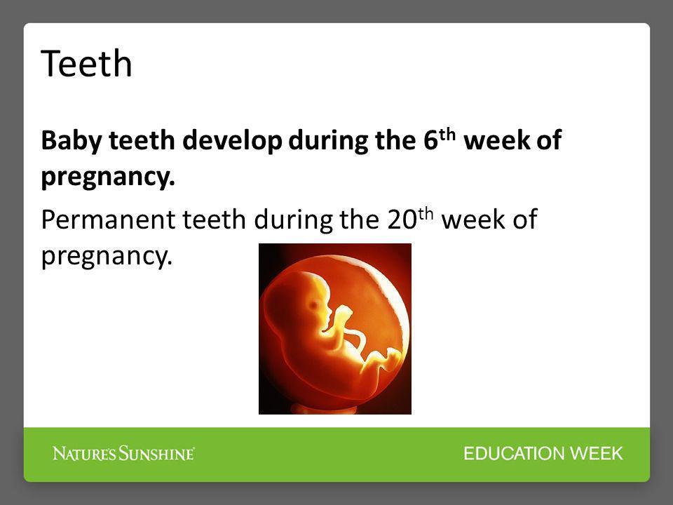 Teeth Baby teeth develop during the 6th week of pregnancy.