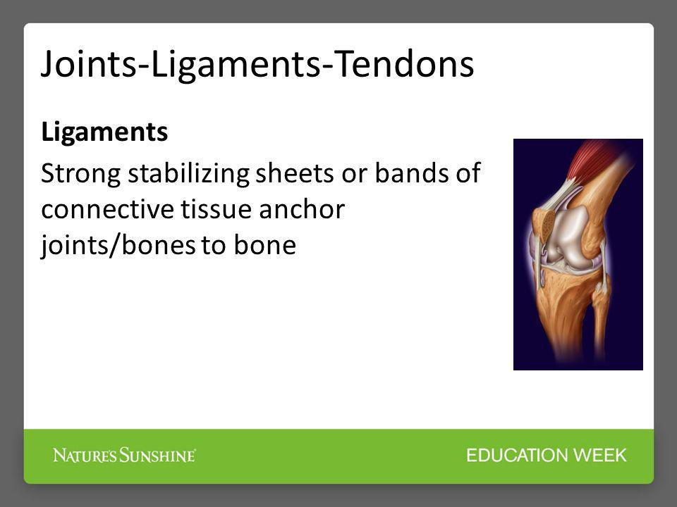 Joints-Ligaments-Tendons