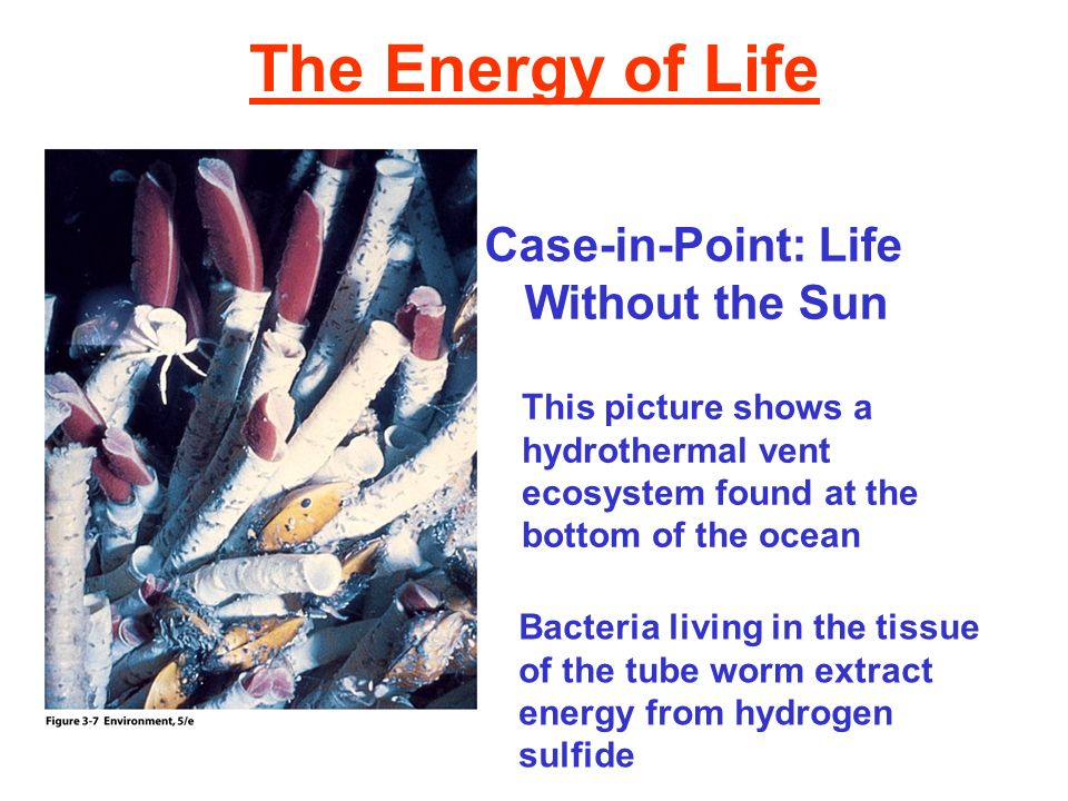 The Energy of Life Case-in-Point: Life Without the Sun