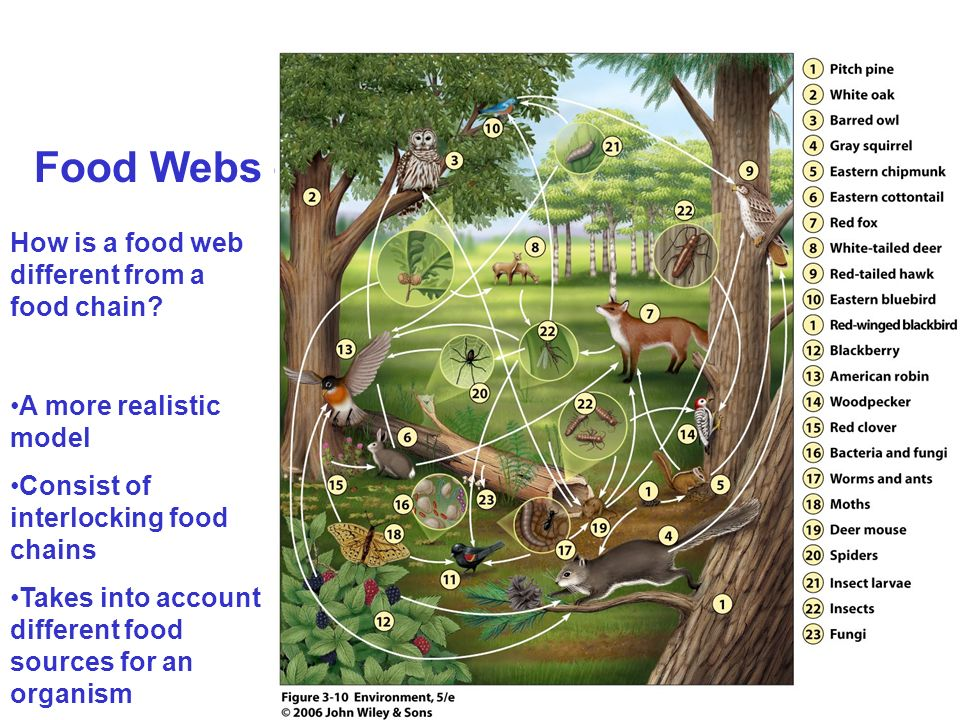 Food Webs – How is a food web different from a food chain