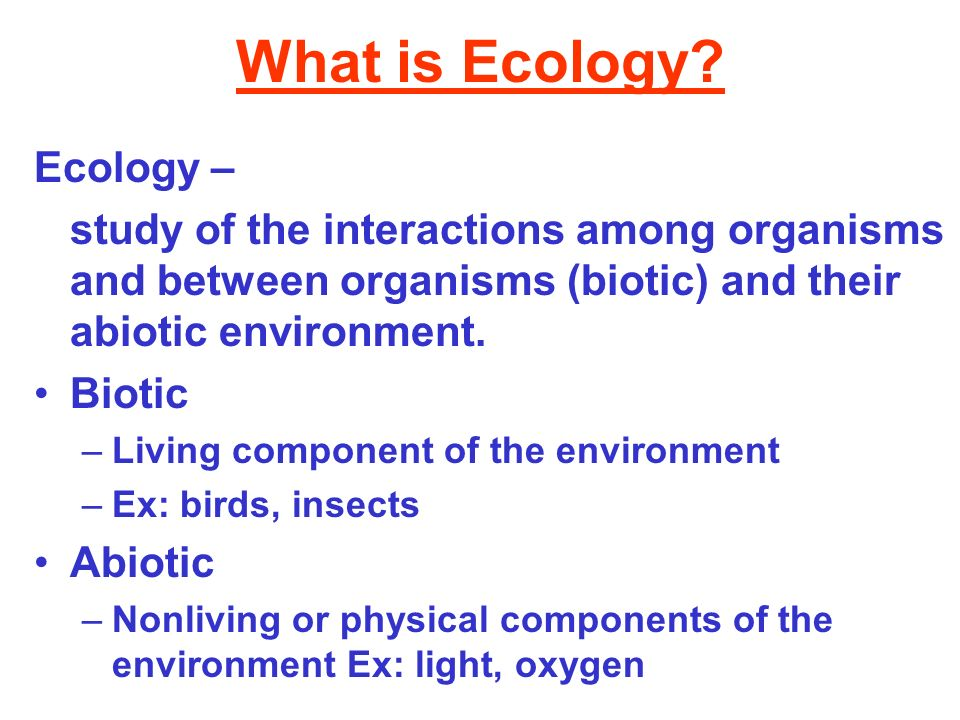 What is Ecology Ecology –