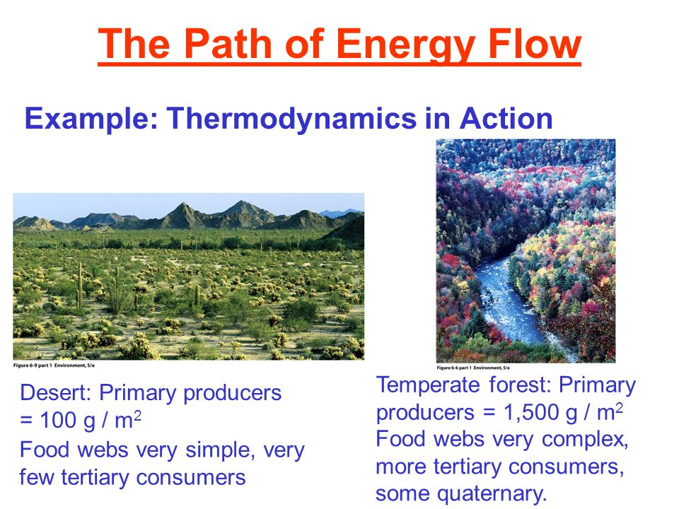 The Path of Energy Flow Example: Thermodynamics in Action