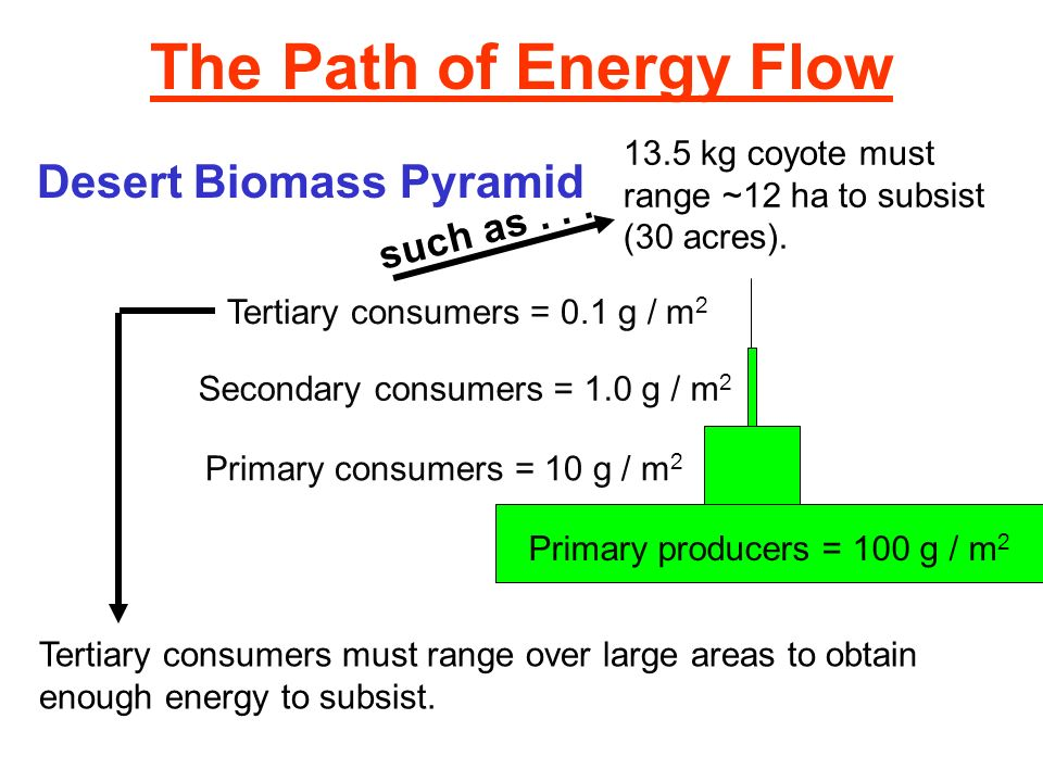 The Path of Energy Flow Desert Biomass Pyramid such as . . .