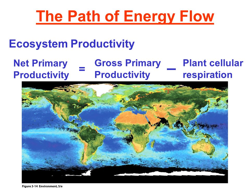 The Path of Energy Flow Ecosystem Productivity =