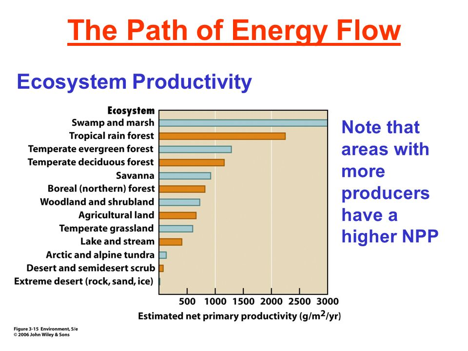 The Path of Energy Flow Ecosystem Productivity