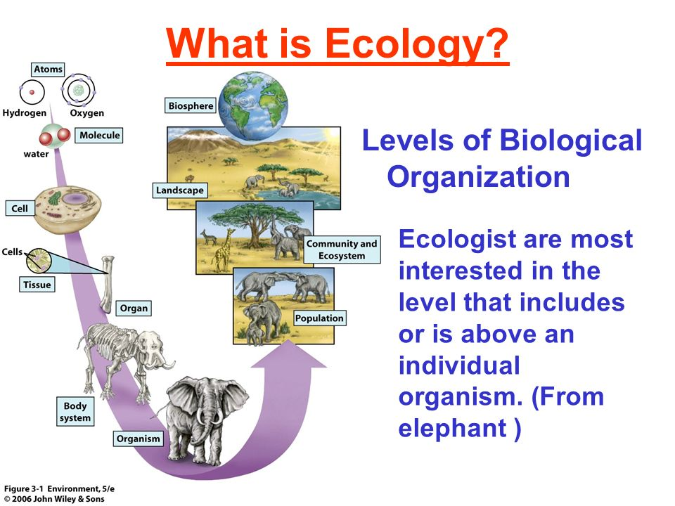 What is Ecology Levels of Biological Organization