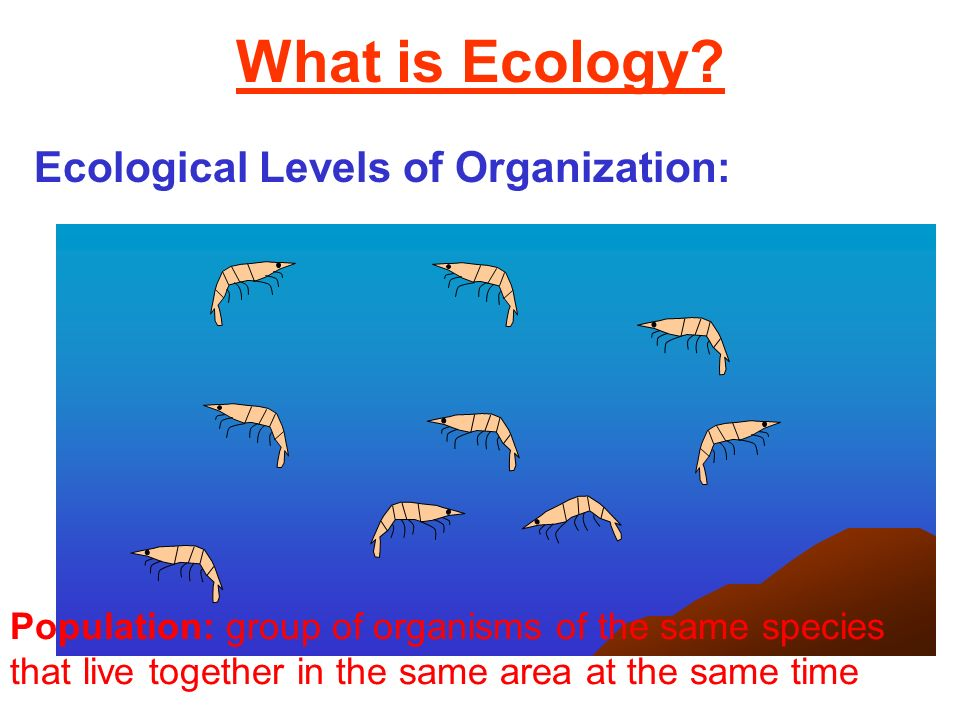 What is Ecology Ecological Levels of Organization: