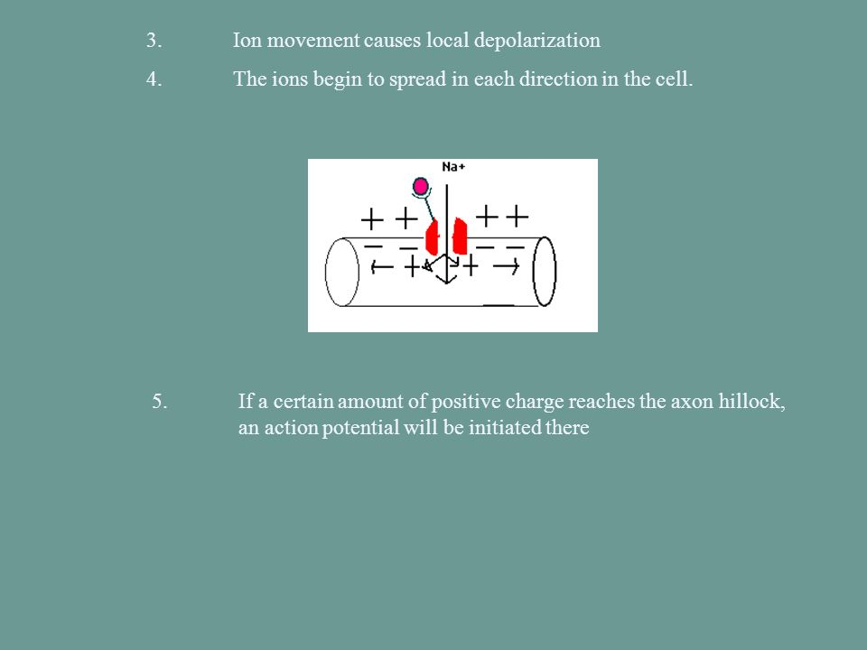 3. Ion movement causes local depolarization