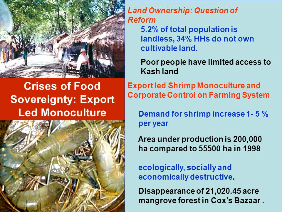 Crises of Food Sovereignty: Export Led Monoculture