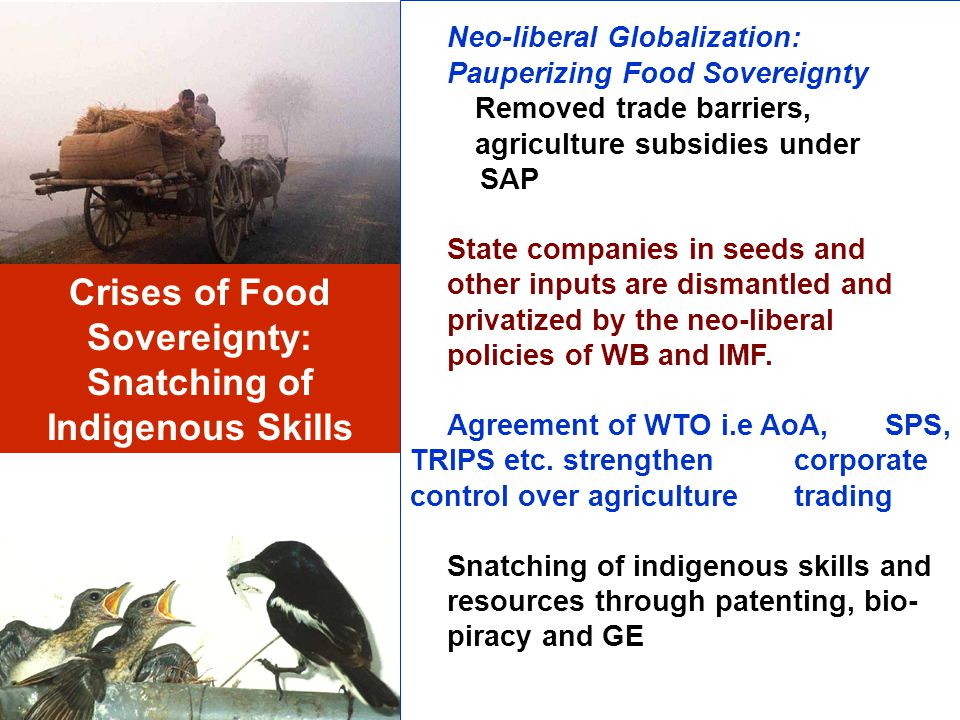 Crises of Food Sovereignty: Snatching of Indigenous Skills