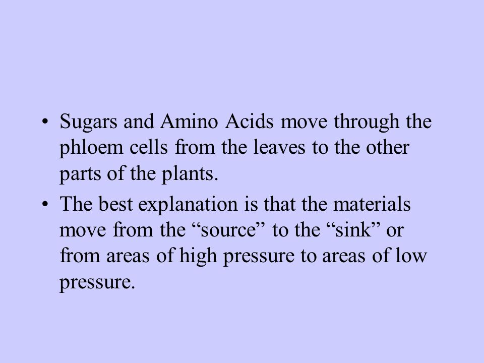 Sugars and Amino Acids move through the phloem cells from the leaves to the other parts of the plants.